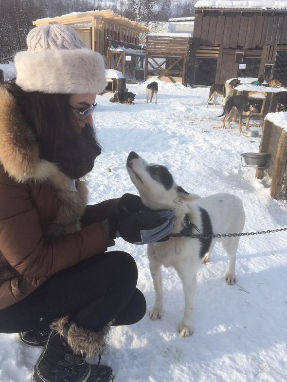 Husky petting